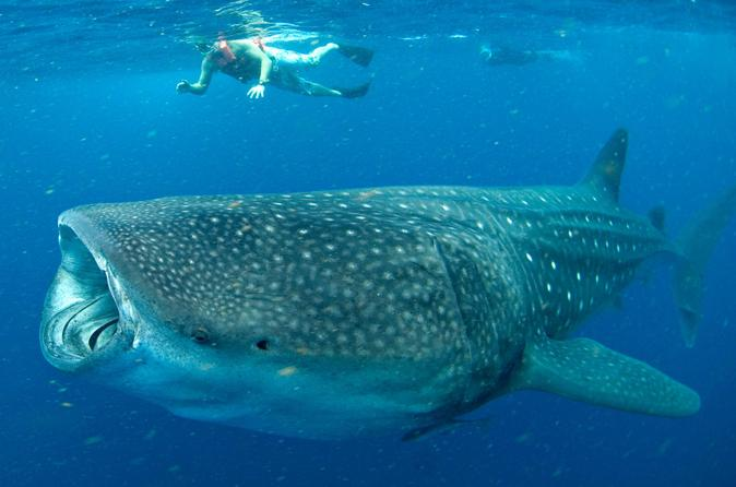 things to do in Cancun - diving