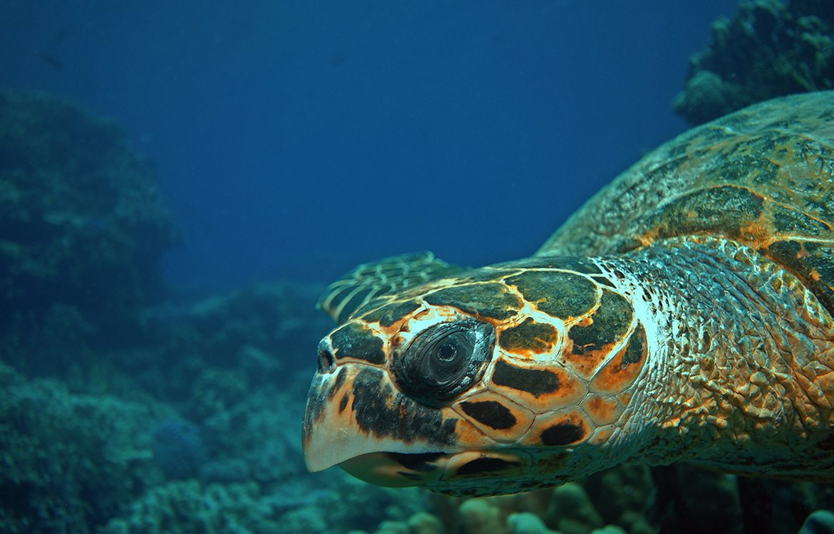 cancun-gallery-turtle-wildlife